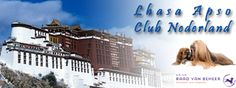Lhasa Apso, rasvereniging, club,  Nederland