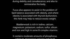 Bladderwrack health benefits