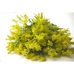 GrowersBox.com: Flowers: Solidago 100 Stems: Wholesale Flowers