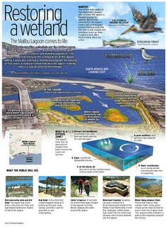 A year after it's unveiling scientists say the Malibu Lagoon restoration is showing signs of success, with the return of wildlife, improved water circulation and growing vegetation. Information Architecture, Information Design, Information Graphics, Visual System, How To Create Infographics, Earth Science, Data Visualization, Scientists, Habitats