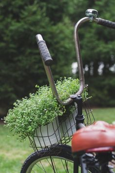 close-up photography of black bicycle carrying pot of green plants Bicycle Basket Pots Plants Organic Gardening, Gardening Tips, Gardening Supplies, Indoor Gardening, Adventure Travel Companies, Bicycle Basket, Close Up Photography, Free Plants, Eco Friendly House