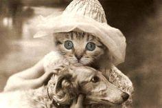 Sylvia  Vintage Cat 5x7 Print   Cute Cat Photo  by AnimalFancy, $15.00
