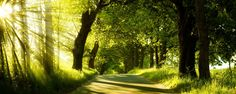 Color wallpapers Page Trees Road Forest Landscape Full