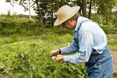 7 Hacks Used By Prize Winning Gardeners To Double Their Tomato Harvest Home Vegetable Garden, Tomato Garden, Vegetables Garden, Growing Veggies, Growing Tomatoes, Greenhouse Gardening, Gardening Tips, Tomato Fertilizer, Best Tasting Tomatoes