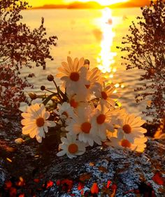 Relax and enjoy a beautiful autumn sunset. Animation I made 🧡❤️🍂🍁💋🌅❤️🧡 Well it appears some of you are stealing Beautiful Flowers Wallpapers, Beautiful Nature Wallpaper, Good Morning Flowers, Good Morning Gif, Beautiful Fantasy Art, Beautiful Gif, Beautiful Sunrise, Love Heart Images, Sunflower Wallpaper