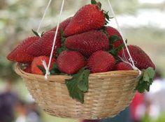 Festa Frawli (Strawberry Festival) - Mgarr, Malta