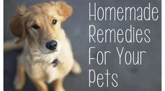 Homemade Remedies For Pets Using Essential Oils! from One Good Thing by Jillee ...  Click here for full article: http://www.onegoodthingbyjillee.com/2013/05/homemade-remedies-for-pets-using-essential-oils.html