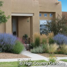 """Believe it or not, Boulder Colorado has very hot, very dry summers. This planned garden can take the semi-arid conditions perfectly, as they're native plants. High Country Gardens """"Colors and Textures"""" garden, set of 27 baby perennials, $160.23. Yes, 23 cents!"""