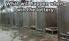 When I fantasized about winning the lottery I made lists of all the rescues I would donate too!!! #rescue