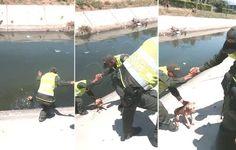 Un perrito quedó atrapado cuandocayóal agua de un canal, pero…