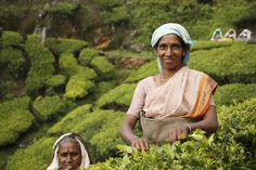 There are about 30 tea plantations in and around #Munnar. Tea pickers in colourful clothes and baskets on their backs are barely visible amidst the sea of tea plants; each person plucks as much as 25-30 kilograms of tea leaves per day. Four kilograms of green leaf make 1 kilogram of black tea that goes into the making of your morning cup.