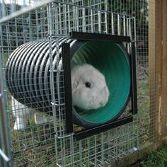 How to Design a Rabbit Play Area? These Ideas Will Inspire You Rabbit Tunnel, Rabbit Run, Rabbit Farm, Raising Kittens, Raising Rabbits, Meat Rabbits, Large Rabbits, Bunny Cages, Rabbit Cages