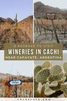 Wineries in Cachi Argentina | Bodegas en Cachi Salta | Bodegas en Salta | Wineries in Cafayate Salta | Cachi wineries to visit | Winery tourism in Argentina | Wine tasting in Argentina | Argentina wine regions to visit | Things to do in Cachi Argentina | Things to do in Salta Argentina | Northwest Argentina itinerary ideas | Desert wine region in Argentina | South America wine region | Wine tasting in South America | Things to do in Cafayate | Things to do in Argentina Brazil Travel, Belize Travel, Costa Rica Travel, Backpacking South America, South America Travel, Argentina South America, Travel Articles, Travel Info, Travel Tips