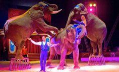 Animal welfare charity slams plans for elephant circus act Circus Show, Circus Theme, Preschool Books, Preschool Activities, Circus Tickets, Fair Rides, Circus Acts, Circo Vintage, Hotel Party