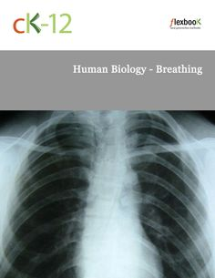 Access this FlexBook with one click: http://www.ck12.org/book/Human-Biology---Breathing/ #CK12 #FlexBook
