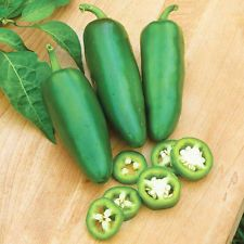 200Pc Jalapeno Chile Pepper Seeds Non Gmo Heirloom Vegetable Seeds Plant Decor