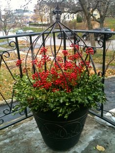 Easy; a boxwood wreath at the rim, obelisk left over from summer. A mass of plastic berries. This can be repeated year after year with little effort
