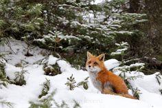 "Winter Wonderland by Megan Lorenz on 500px. ""Such a sweet little face."""