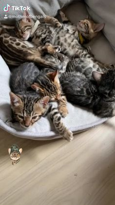 Welcome to Mother of Bengals! Our goal is to spread cat love and make unique cat toys that last and don't break the bank. Kitten Love, Cute Kitten Gif, I Love Cats, Crazy Cats, Baby Kittens, Kittens Cutest, Cats And Kittens, Newborn Kittens, Cute Funny Animals