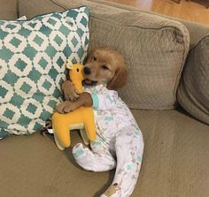 Golden Retriever Puppies Cute puppy snuggle cuddle dress up pajamas pjs toy stuffed golden retriever couch Cute Little Animals, Cute Funny Animals, Funny Dogs, Funny Humor, Puppies In Pajamas, Cute Dogs And Puppies, Doggies, Cute Animal Pictures, Dog Pictures