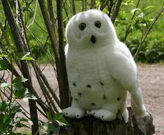 Tunturipöllö isompi - Kananlento/Osuuskunta Orrella Parrot, Owl, Bird, Animals, Parrot Bird, Animales, Animaux, Owls, Birds