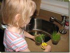 "Grass is my all-time favorite toddler and preschooler plant - it's quite easy to grow and they can even practice their scissor skills by giving their plant a ""haircut""!"