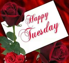 I will always love you Tuesday Wednesday, Monday Tuesday, Happy Tuesday, Days Of Week, Tuesday Quotes, Always Love You, Blessed, Seasons, Blessings