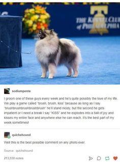 Funny Animal Memes, Cute Funny Animals, Cute Baby Animals, Funny Cute, Animals And Pets, Cute Dogs, Funny Memes, Hilarious Sayings, 9gag Funny