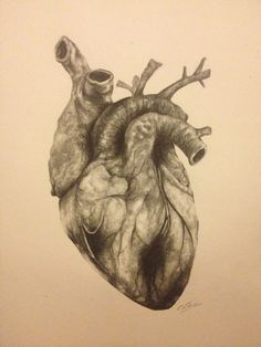 drawing of the human heart