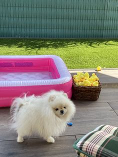 (notitle) Source by rj953 The post appeared first on Elwood Kennels. Teacup Puppies, Pug Puppies, Pugs, Cute Baby Dogs, Cute Babies, Animals And Pets, Cute Animals, Cute Pomeranian, Short Hair Cuts For Women