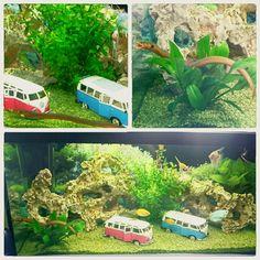 Aquarium  #beruhigende #atmosphäre #farbenfroh #VW #asiatischeraal