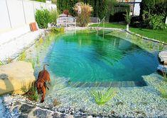 Natural Swimming Ponds, Swimming Pools Backyard, Pool Spa, Swimming Pool Designs, Lap Pools, Indoor Pools, Pool Decks, Garden Pond Design, Pool Houses