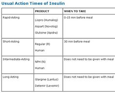 Insulin Action Times