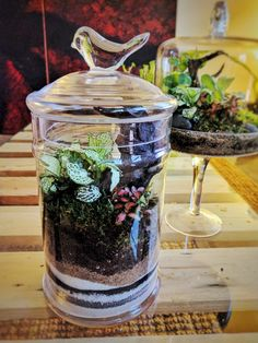 Terrarium in a used cookie jar