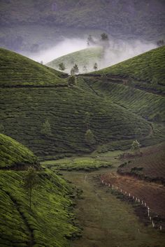 Munnar by spf3million a.w., via 500px