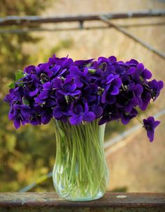 Mom would ick a big bouquet of violets every spring. They were her favorites