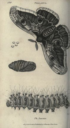 [][][] Ph. Junonia. Zoological lectures delivered at the Royal Institution.  London,Kearsley,1809..