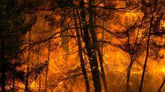 """DIRECT. Incendies dans le Sud-Est : la France demande à l'UE """"deux avions Canadair"""" en soutien"""