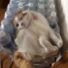 This cat who crawled into a case of water: | 25 Photos You Definitely Need To See Before You Die