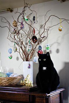 eastern cat