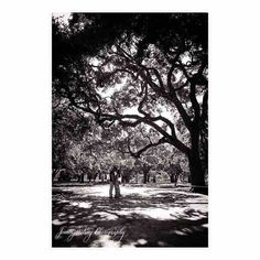 Mimi & David came all the way from Denver CO for the holiday weekend - looking forward to their wedding in September at The Debordieu Club! @mwm513 @debordieu_weddings #jenningskingphotography #charleston #engagementsession #engagement #bw #oaktree @stunningandbrilliantevents