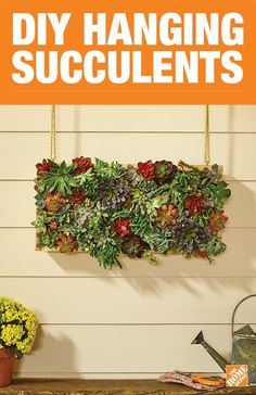 Build this DIY vertical succulent planter to add low-maintenance greenery to your home. To create this space-saving garden all you'll need are a few boards, some chicken wire, and a couple of free hours. Click to visit the project guide for step-by-step instructions.