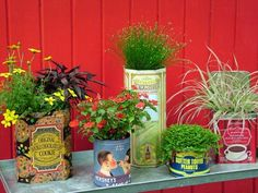 Old or reproduction food tins make terrific pots for your favorite annual flowers or houseplants. Group them by a theme, such as candy, coffee or veggies, or mix them up for a quaint and colorful collection.