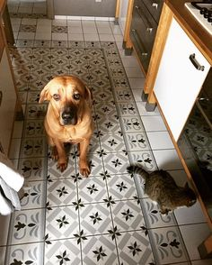 Sunday lunch preparing with the assistance of my beloved helpers 🐶🐱 nice sunday my dears❤️ #dog #cat #doglovers #catlovers #home #family #homesweethome #homestyle #homedesign #kitchen #tosainu #living #life #mylife #style #interior #interiores #interiors #interior_and_living #myhome #tv_living #thismoment #interiorstyling #interiorstyle #lifewithanimals #instahome #instamoment #interiordecor #decoration #happy