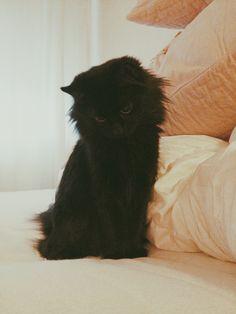 OMGadorable cat