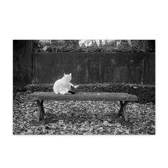 https://flic.kr/p/CaVSRg   Mori_Shiro December 2015  #cat #photograph #blackandwhitephotography