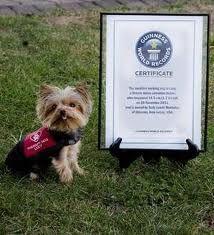 161 Best Service Dogs Images Psychiatric Service Dog Service Dogs