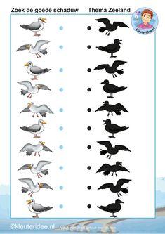 Zoek de goede schaduw van de meeuwen, thema Zeeland, kleuteridee, Kindergarten math shadow activity, free printable.