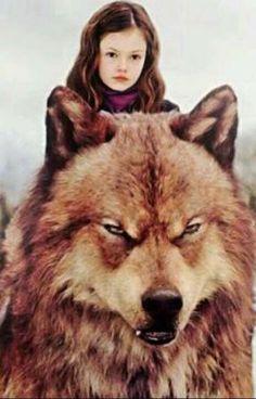 Twilight Wolf Pack, Twilight Saga Books, Twilight Movie, Bella Y Edward, Jacob And Bella, Twilight Jacob And Renesmee, Twilight Edward, Kellan Lutz, Jacob Black