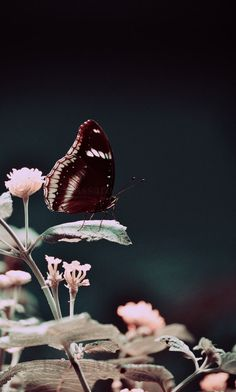 Fine Art Nature Photography | Butterfly Spring Print | Photography: EDMPrintedEphemera